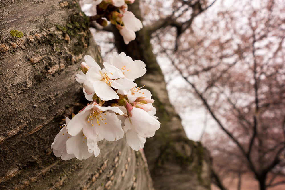 From the withered tree, a flower blooms – Photography OCD