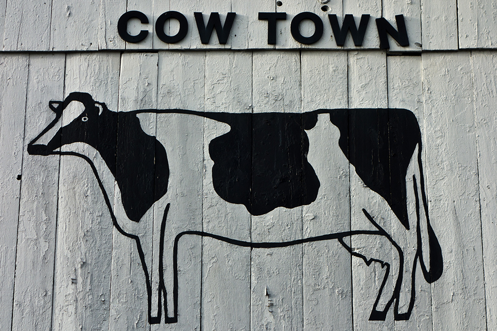 Cow Graffiti