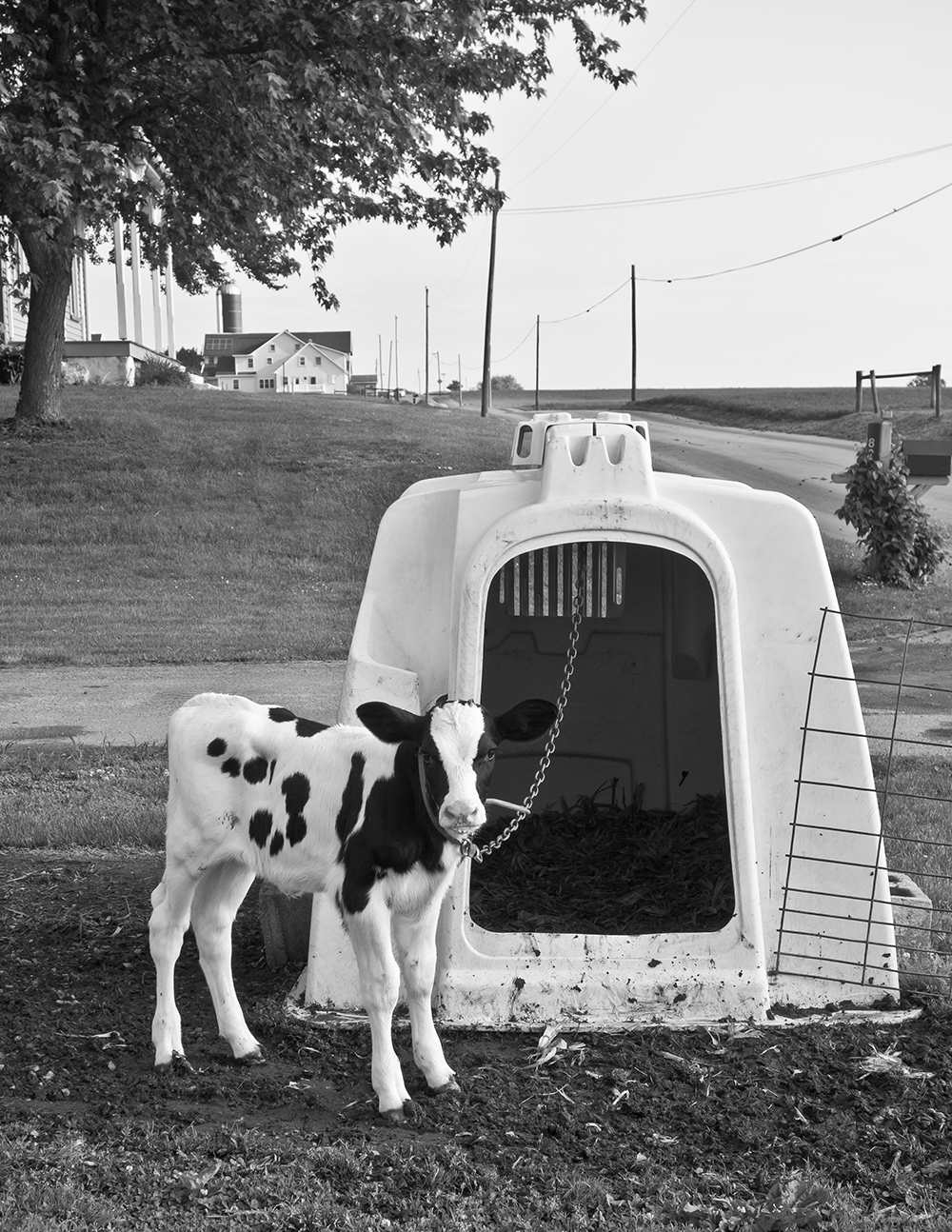 Cow House/Hutch
