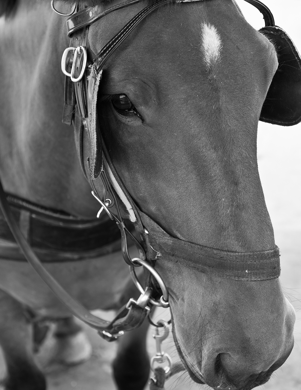 The Long Face of Equanimity